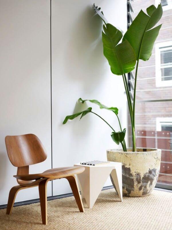 Vaso de planta grande próximo a janela