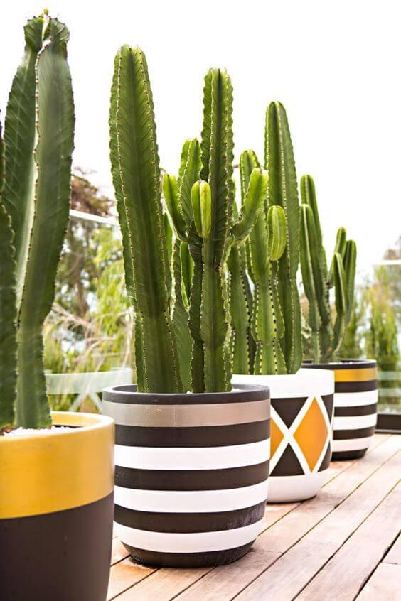 Cacto no vaso grande na varanda de casa