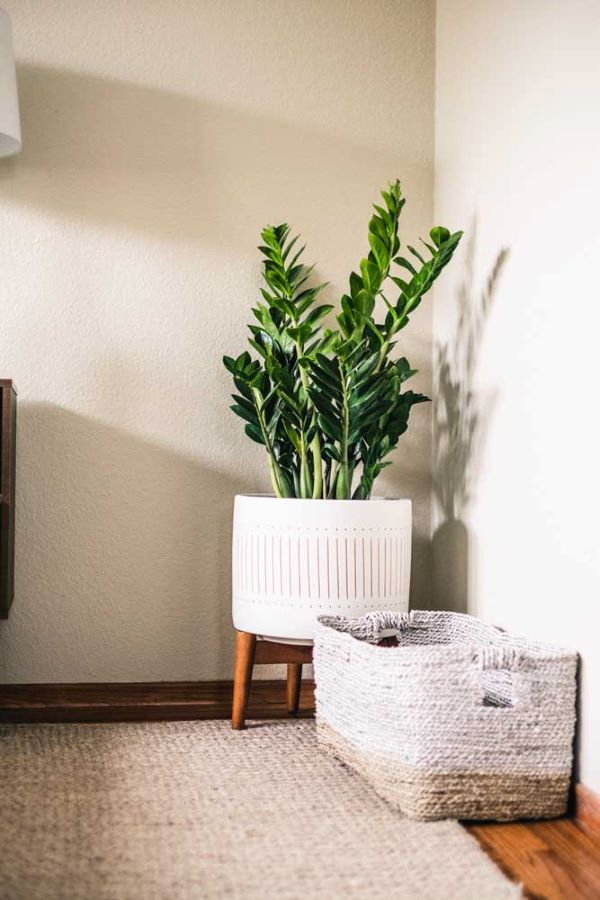 Vaso grande no canto da sala