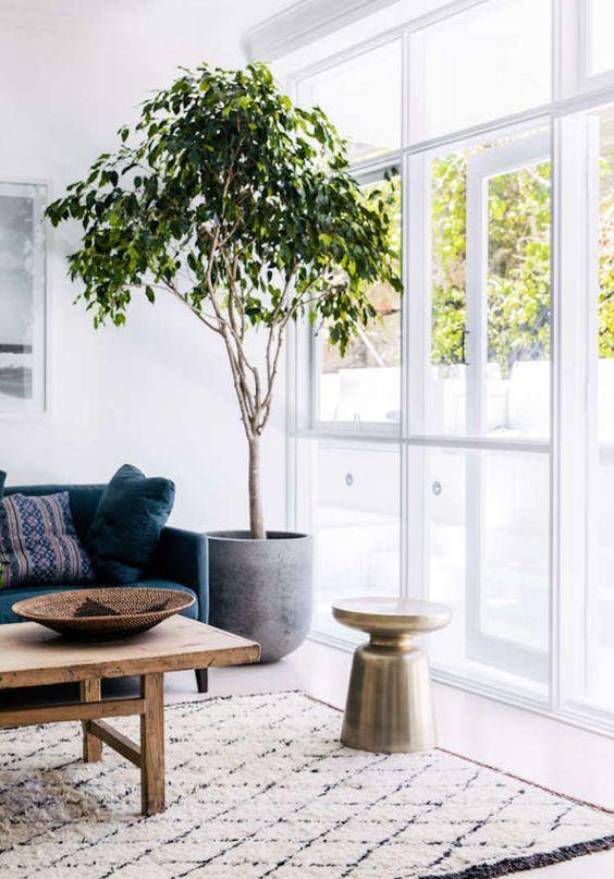 Vaso grande para sala de estar ao lado do sofá azul