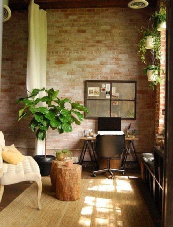 A planta ficus lyrata traz frescor para a decoração interna