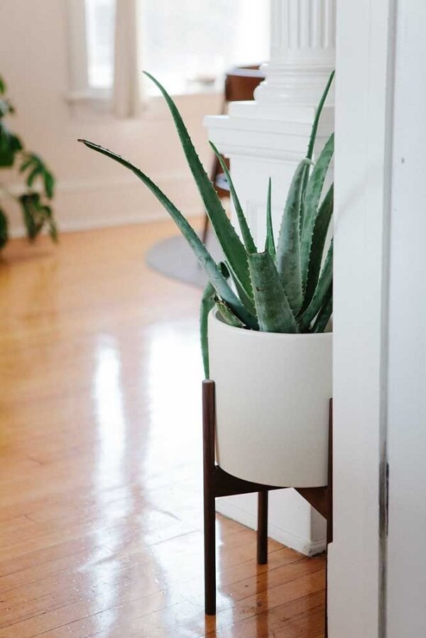 Aprenda como plantar babosa em vaso e decore a entrada de casa