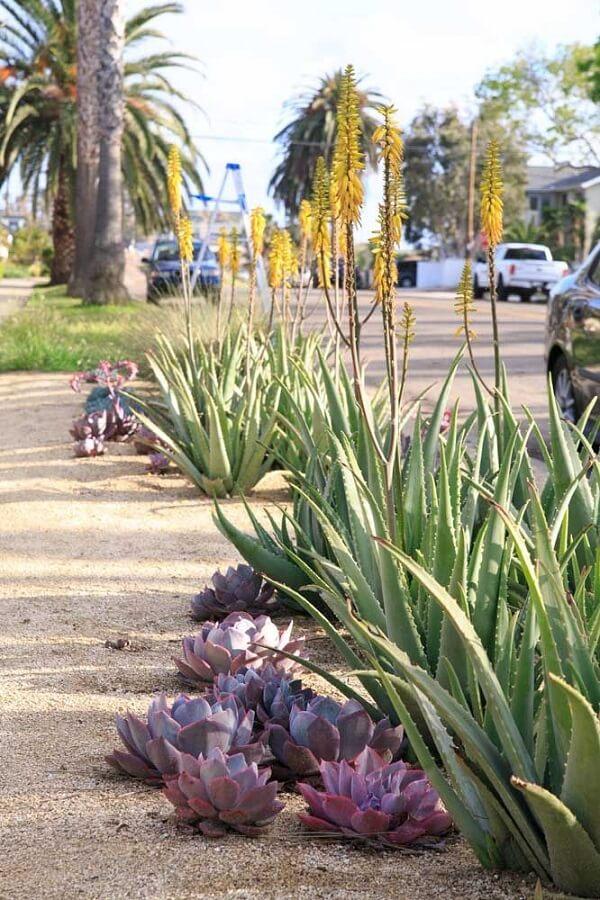 Como plantar babosa no chão formando um lindo caminho na calçada
