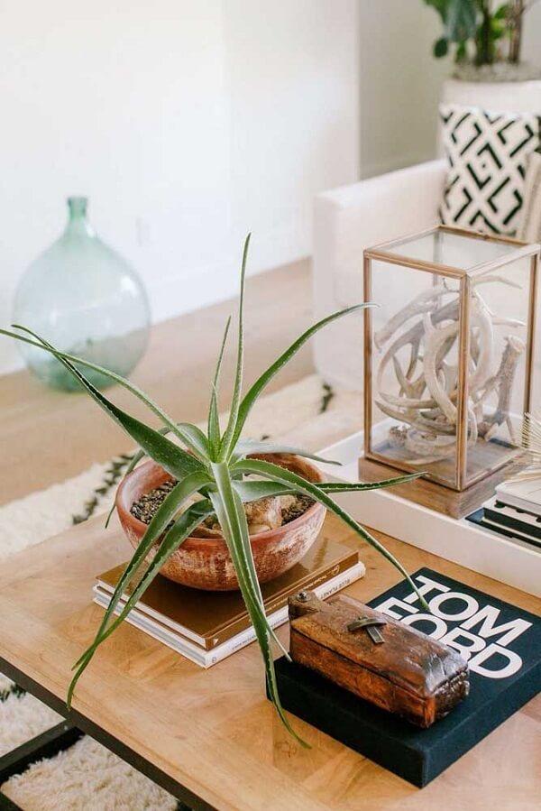 Decore a mesa de centro da sala de estar com vaso de babosa