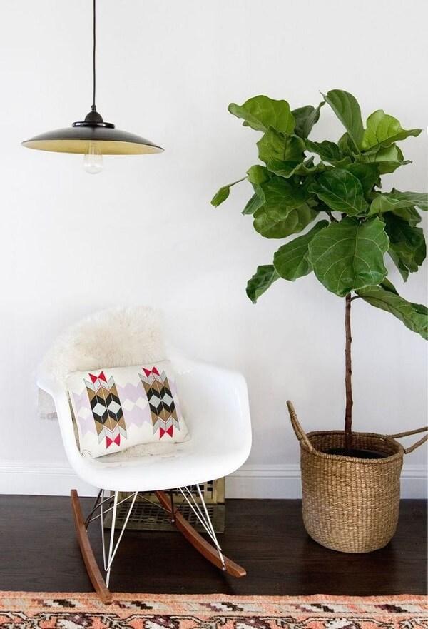 Ficus lyrata cuidados para que a planta cresça de forma saudável