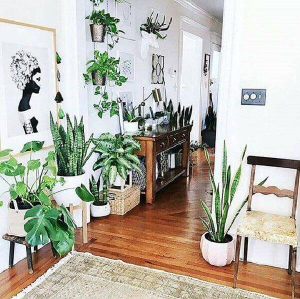 O feng shui sala aconselha cultivar diferentes plantas no ambiente
