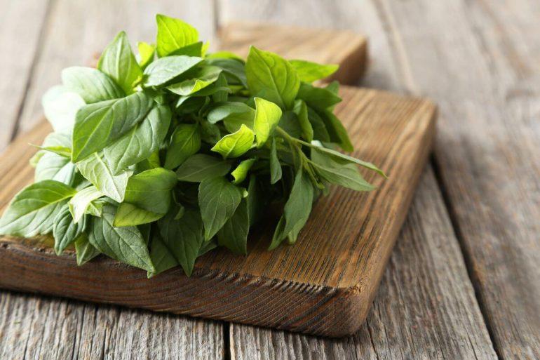 O manjericão é uma erva altamente nutritiva