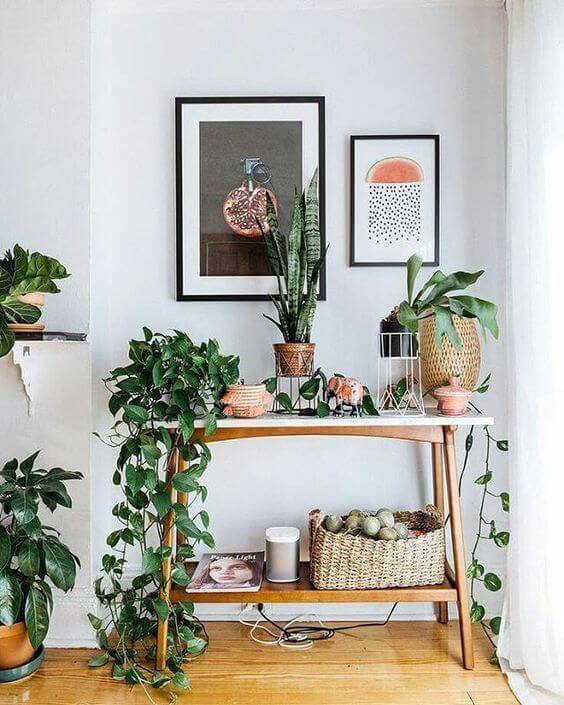 Aparador decorado com planta jiboia e outras plantas bonitas