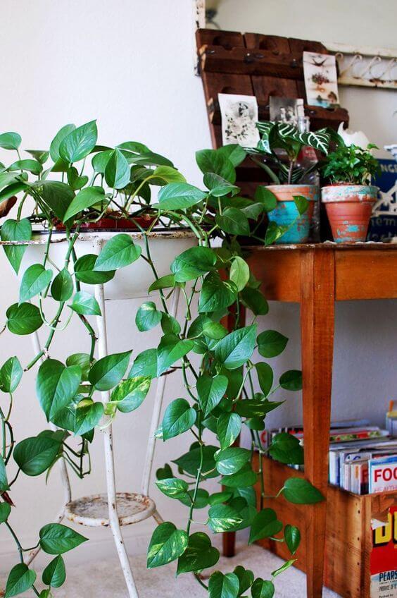 Planta jiboia na sala de estar moderna