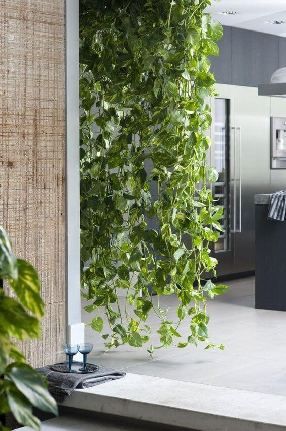 Cozinha moderna decorada com planta jiboia
