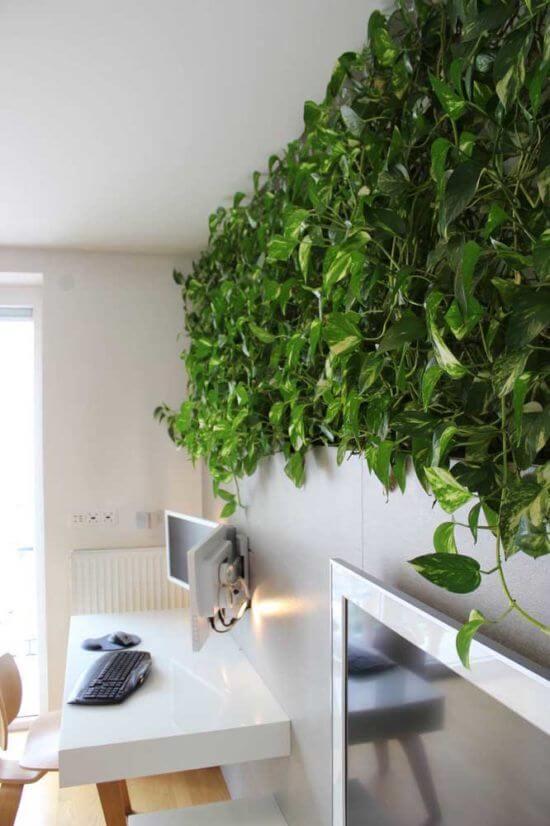 Planta jiboia na decoração do escritório