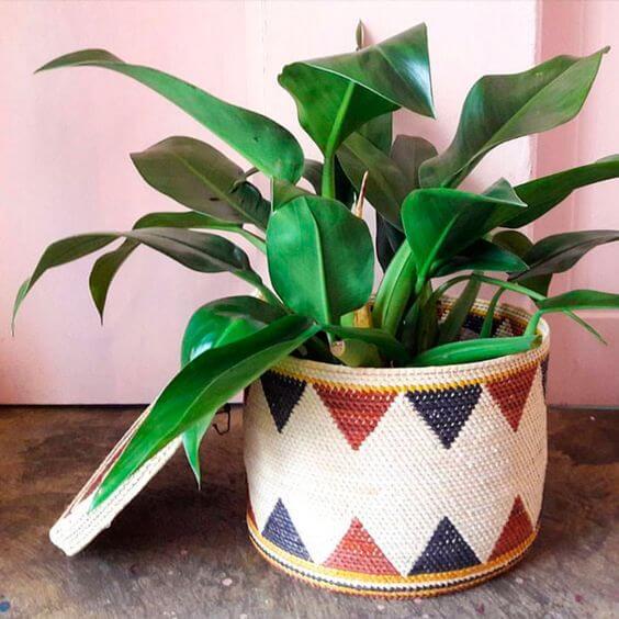 Decore sua casa com lindas plantas