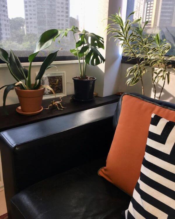 Pacová na janela de casa