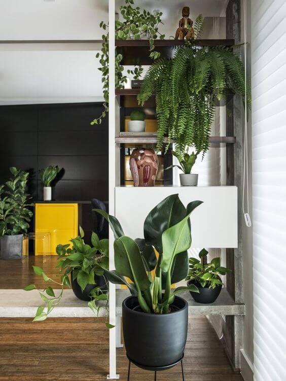 Pacová planta na sala com estante de plantas