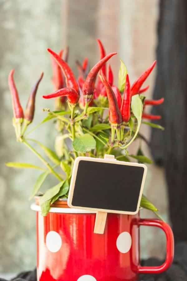 Como plantar pimenta em casa