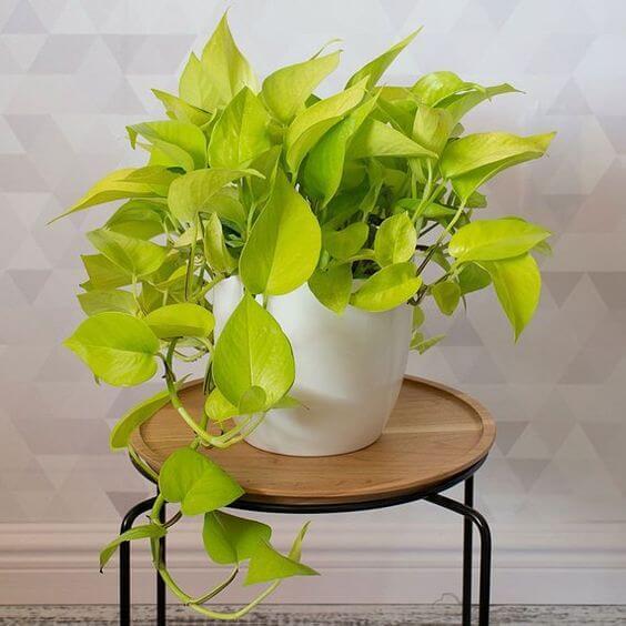 Banco decorado com planta jiboia