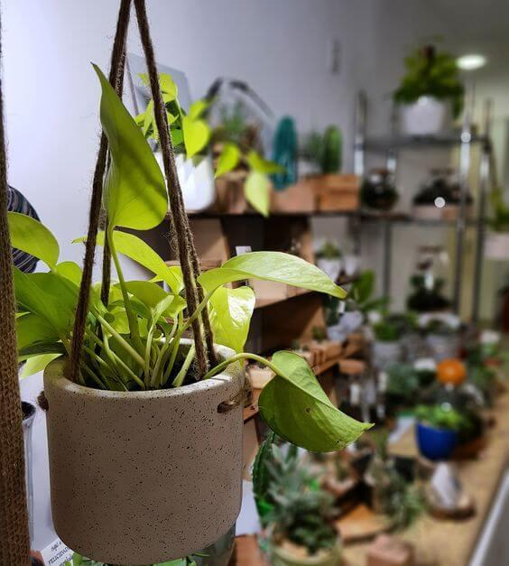 Decoração com vasos de plantas em casa