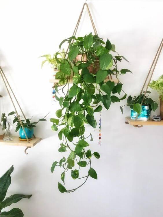 Vaso de planta pendente na decoração moderna