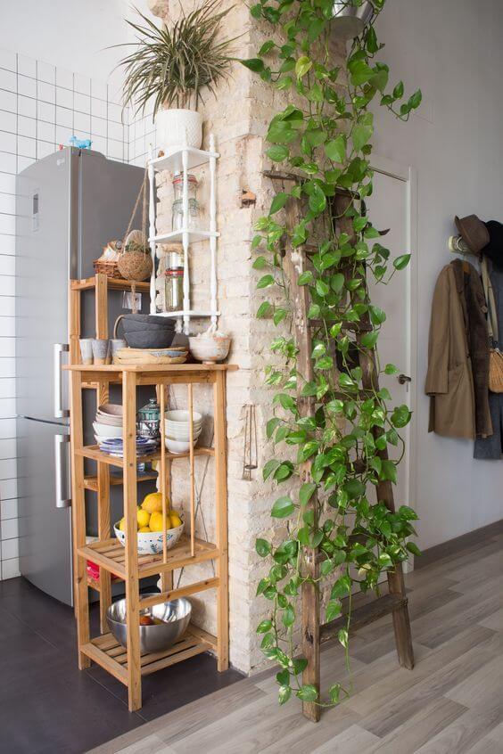 Cozinha decorada com planta jiboia