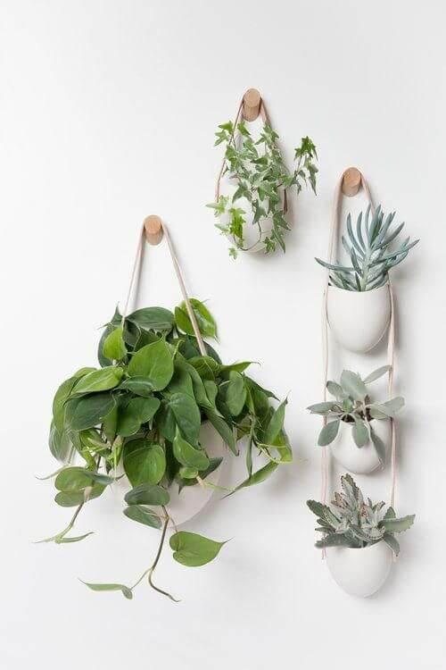 Vasos de plantas como planta jiboia e suculentas na decoração de casa