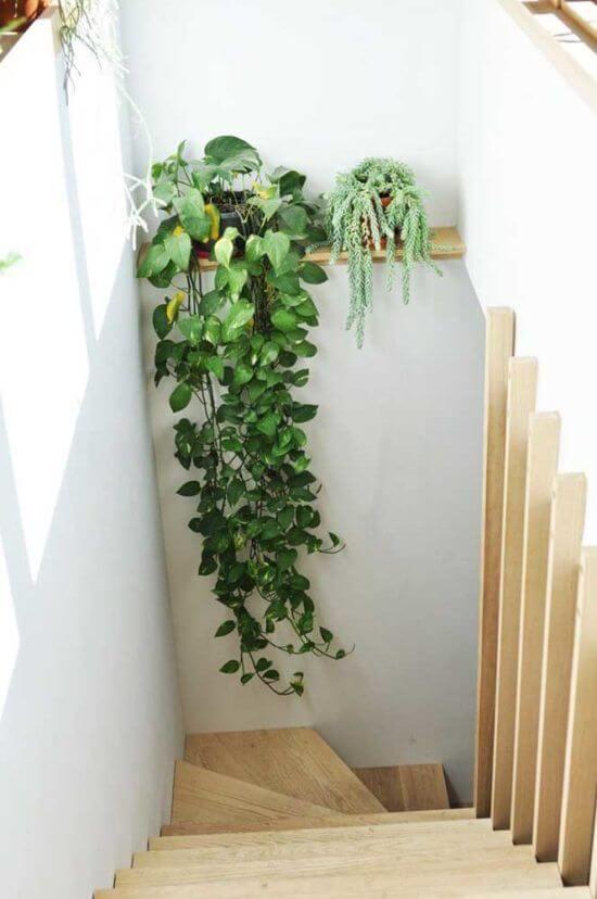 Planta jiboia na escada de casa