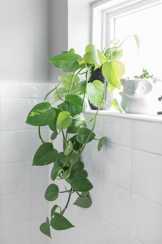 O banheiro também pode ter lindos vasos de planta jiboia na decor