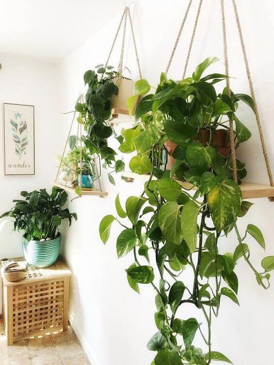 Use a planta jiboia pendente para decorar os cantinhos da sua casa