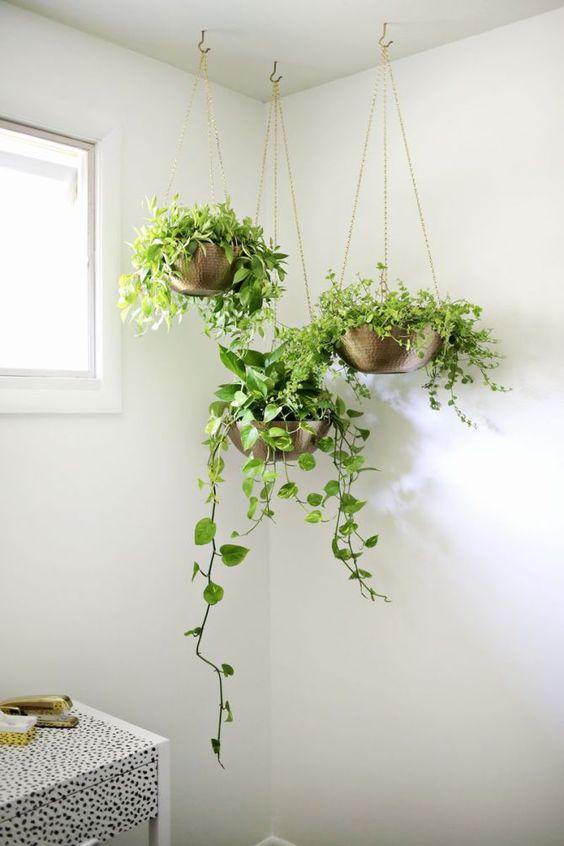 Suporte de vasos pendentes para planta jiboia