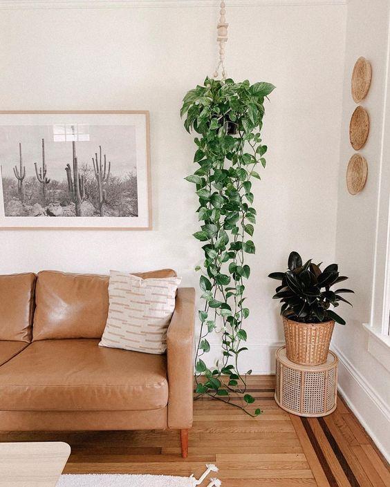 Sala de estar decorada com planta jiboia pendente