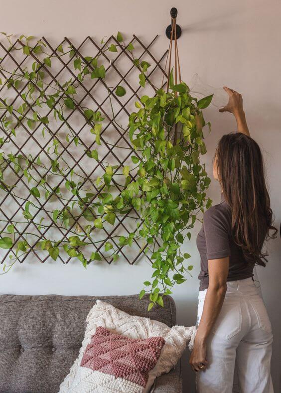 A sala de estar é o local perfeito para colocar a planta jiboia pendente
