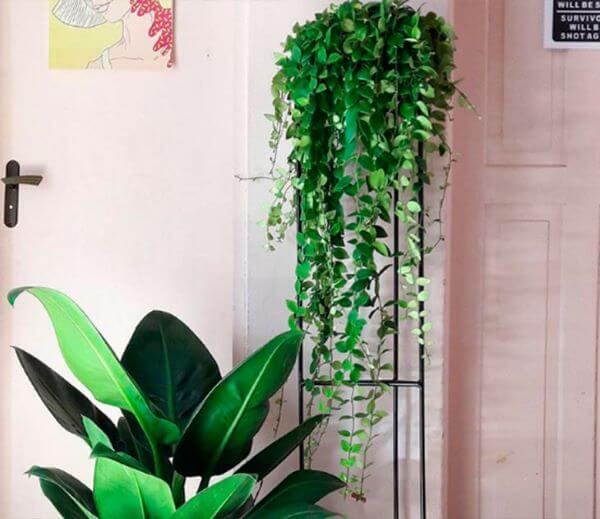 Planta pacová na decoração de casa