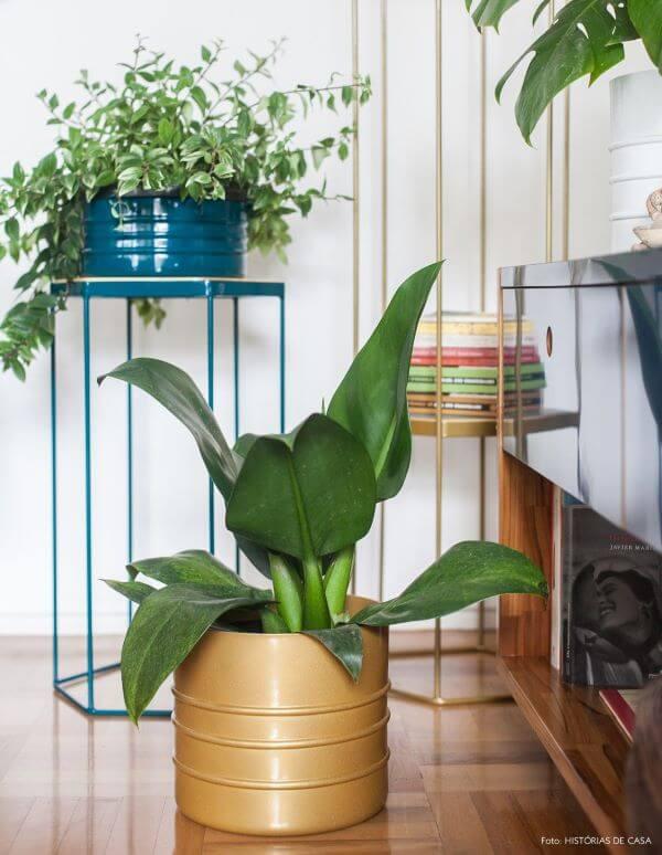 Decore sua casa com a famosa pacová flor