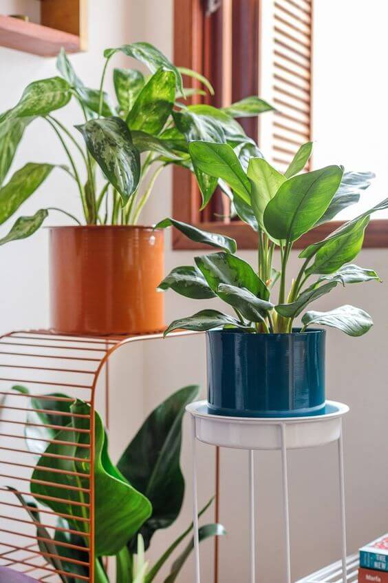 Use outras plantas com o pacová para decorar sua casa