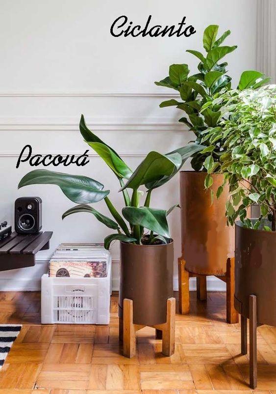 Planta pacová e ciclanto na decoração de casa simples