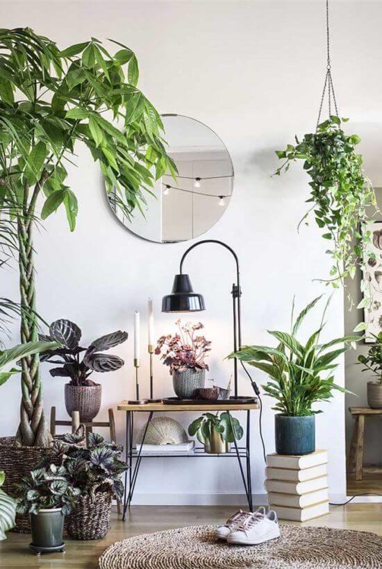 Cantinho da casa com plantas variadas na decoração