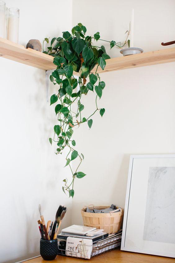 O home office também é um excelente lugar para colocar o vaso de planta jiboia