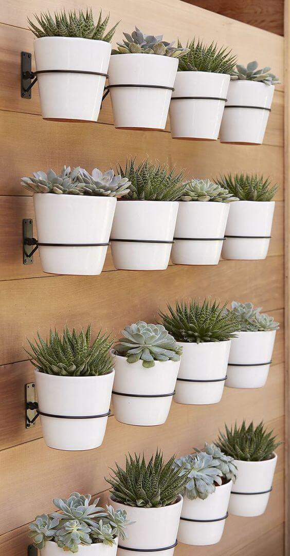Vaso de parede com suculentas na decoração