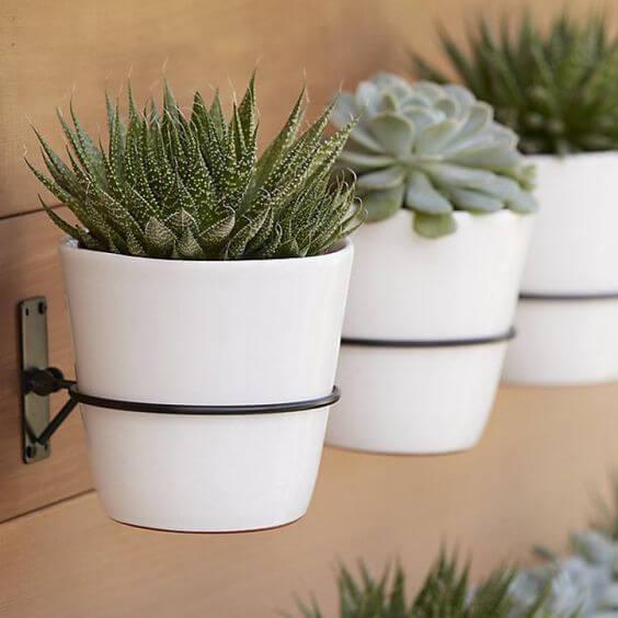 Vaso de suculentas na parede