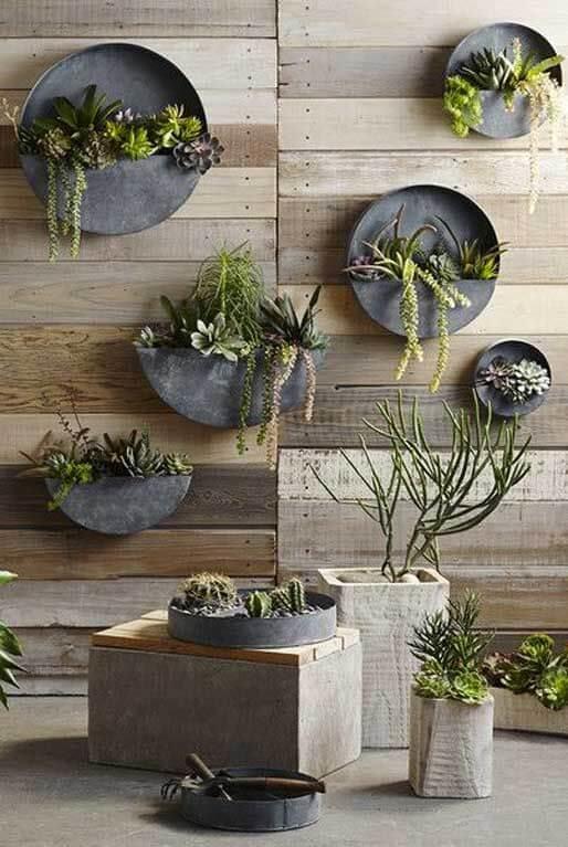 Vaso de parede redondo com suculentas