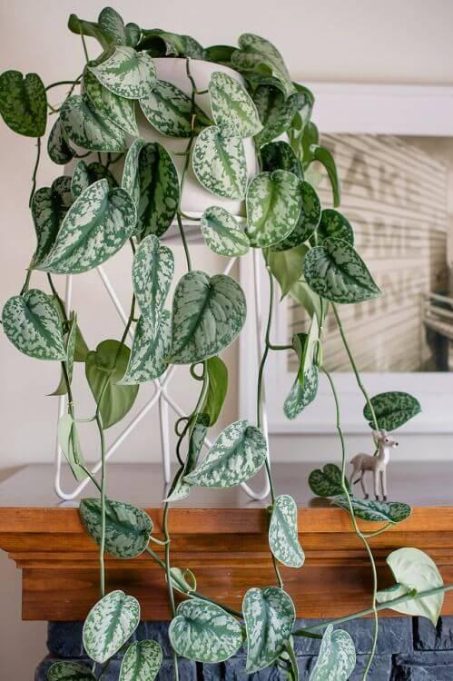 Use a jiboia para decorar a sala de estar