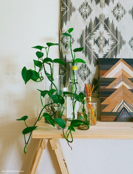 Siga o passo a passo de como plantar jiboia para ter plantas lindas em casa