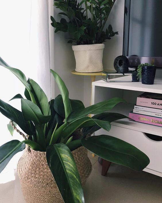 Vaso de planta na sala de estar