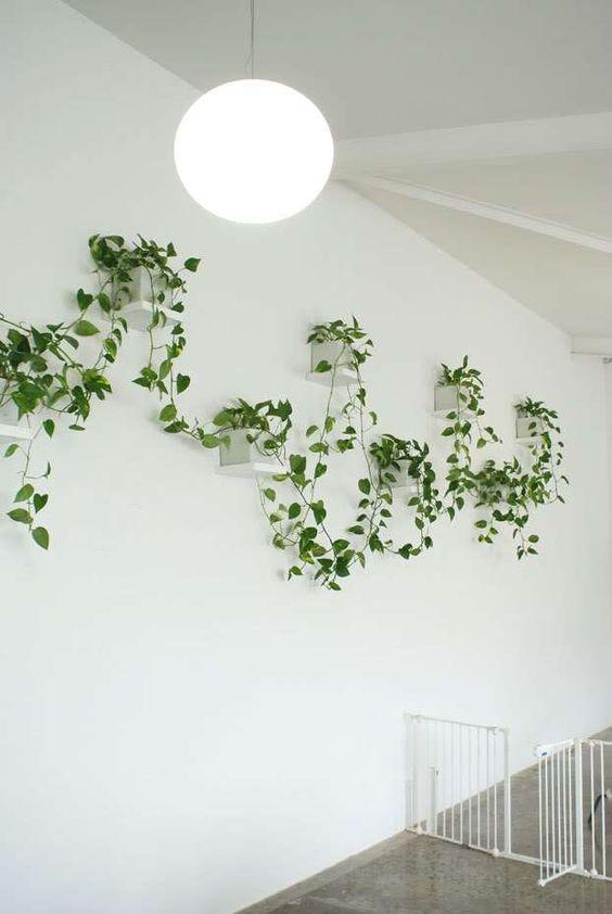 Corredor decorado com vasos de planta jiboia