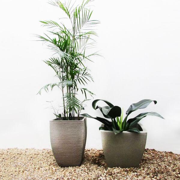 Vaso de plantas modernas na decoração de casa