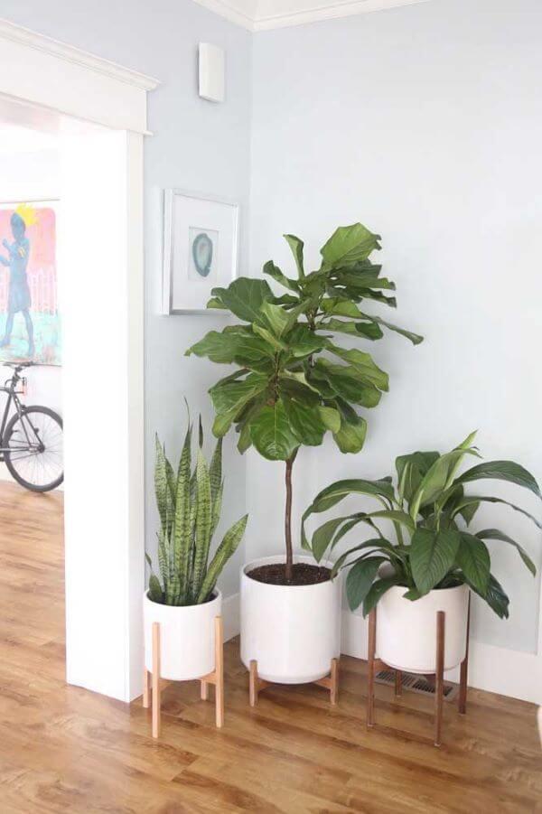 Vasos de plantas na entrada de casa