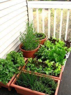Dicas de como fazer horta em casa pequena