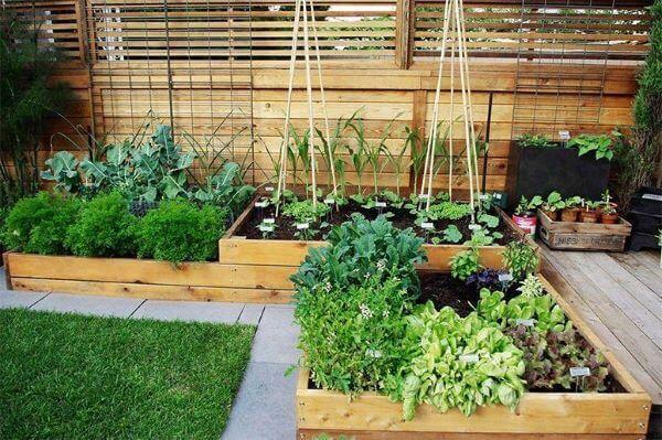 Veja como fazer uma horta no quintal bonita e bem decorada