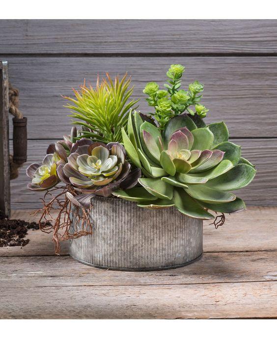 Vaso com echeveria na decoração