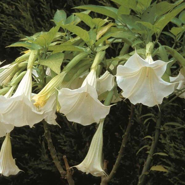 Flores exóticas são diferentes e bonitos