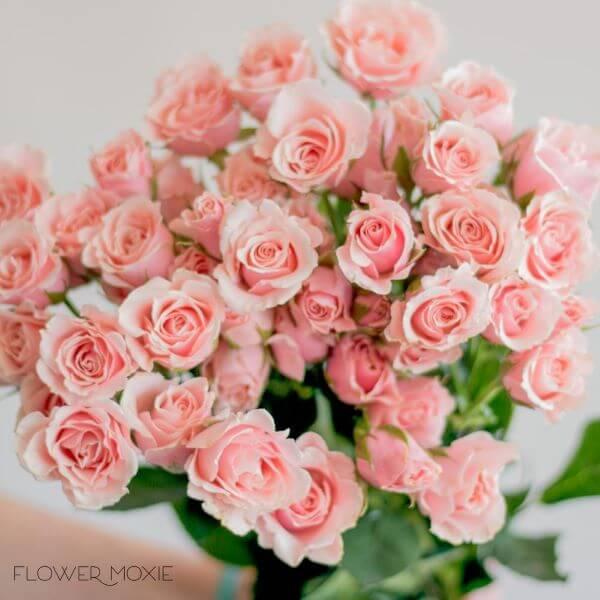 A flor rosa no tom cor de rosa é feminino e lindo